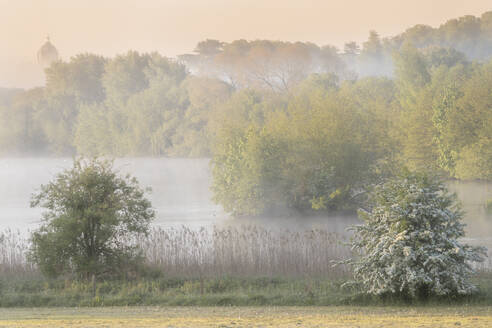 Early morning mists and spring blossom at The Great Lake, Castle Howard, North Yorkshire, Yorkshire, England, United Kingdom, Europe - RHPLF05850