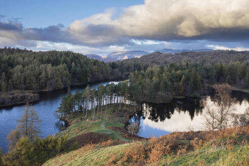 Autumn colours and low angled evening sunlight at Tarn Hows, Lake District National Park, UNESCO World Heritage Site, Cumbria, England, United Kingdom, Europe - RHPLF05853