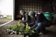 Female farmers preparing potted plants in barn on farm - HEROF38547