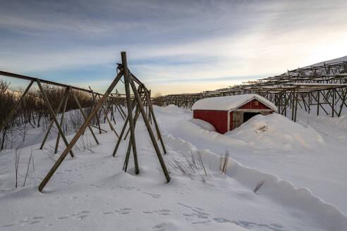 Fresh snow surrounds cod racks and fishermen houses in winter, Lofoten, Arctic, Norway, Europe - RHPLF07388