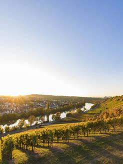 Deutschland, Baden-Württemberg, Stuttgart, Blick auf Stuttgart-Münster, Neckar, Weinberge, Terrassenweinbau, Steillage, Steillagenbau, Herbst, Weinbau - WDF05470