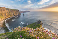 Cliffs of Moher at sunset, with flowers in the foreground, Liscannor, County Clare, Munster province, Republic of Ireland, Europe - RHPLF07554