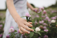 Girl's hands with clover flowers - EYAF00388
