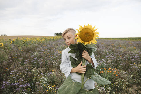 Portrait of a boy holding a sunflower in a field - KMKF01066