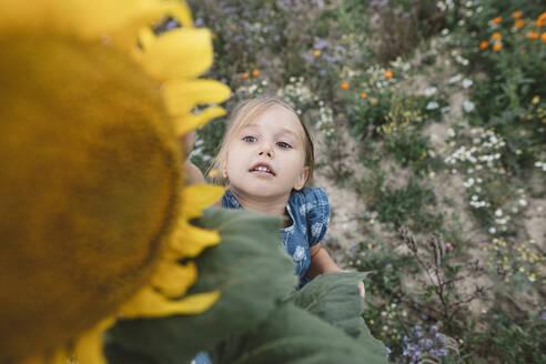 Girl reaching for a sunflower in a field - KMKF01072