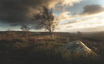 Blustery winds blowing isolated trees in the Peak District, South Yorkshire, Yorkshire, England, United Kingdom, Europe - RHPLF08581