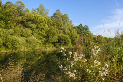 Seitenarm der Isar, Naturschutzgebiet Isarauen bei Geretsried, Bayern, Deutschland - SIEF08967