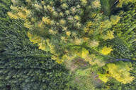 Aerial view of forest with reforestation near Dietramszell, Tölzer Land, Upper Bavaria, Bavaria, Germany - SIEF08977