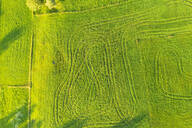 Aerial view of meadows with tractor tracks at Wackersberg, Upper Bavaria, Bavaria, Germany - SIEF08989
