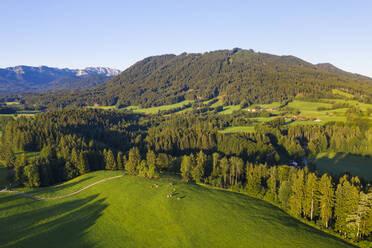 Aerial view of cow pasture and forest near Wackersberg, Isarwinkel, Upper Bavaria, Bavaria, Germany - SIEF08992