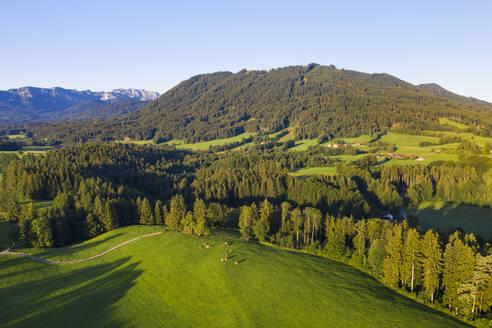 Kuhweide und Wald bei Wackersberg, hinten Benediktenwand, Heigelkopf und Blomberg, Isarwinkel, Luftbild, Oberbayern, Bayern, Deutschland - SIEF08992