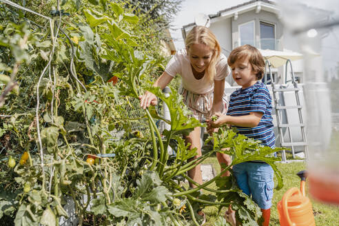 Mother and son caring for vegetable in garden - DIGF08156