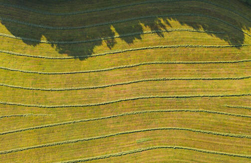 Aerial view of agricultural field, Harmating, Germany - LHF00690