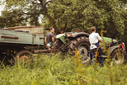 Two people with tractor during cherry harvest in orchard - SEBF00156