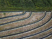 Aerial view of agricultural landscape, Bali, Indonesia - KNTF03361
