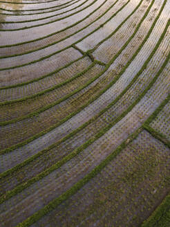 Aerial view of rice terraced field, Bali, Indonesia - KNTF03364