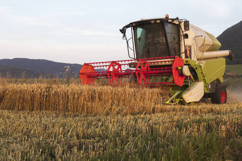 Organic farming, wheat field, harvest, combine harvester in the evening - SEBF00221