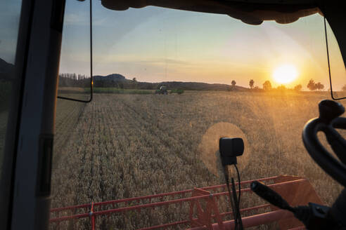 Organic farming, wheat field, harvest, combine harvester in the evening - SEBF00224