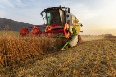 Organic farming, wheat field, harvest, combine harvester in the evening - SEBF00227