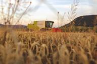 Organic farming, wheat field, harvest, combine harvester in the evening - SEBF00230