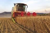 Organic farming, wheat field, harvest, combine harvester in the evening - SEBF00233