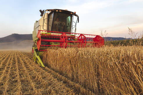 Organic farming, wheat field, harvest, combine harvester in the evening - SEBF00233
