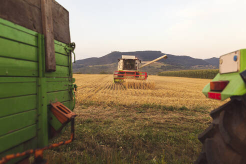 Organic farming, wheat field, harvest, combine harvester in the evening - SEBF00236