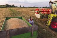 Organic farming, wheat field, harvest, combine harvester in the evening - SEBF00239