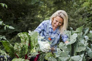 Blond smiling woman harvesting mangold - HMEF00524