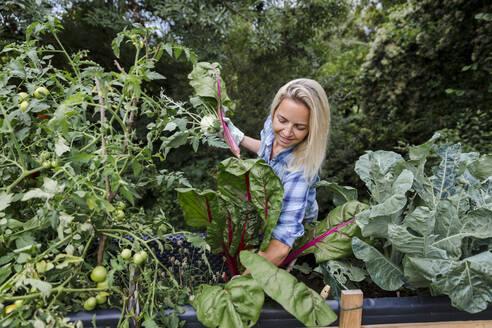Blond smiling woman harvesting mangold - HMEF00527