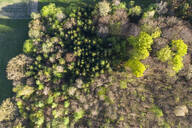Aerial view of trees growing in forest, Dietramszell, Germany - LHF00697