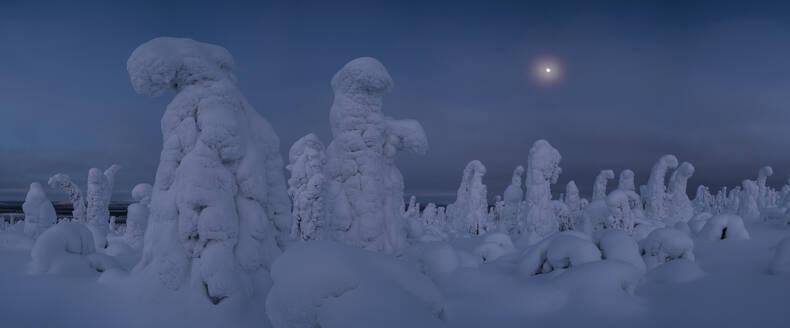 Moonrise over snow covered trees, Tykky, Kuntivaara, Kuusamo, Finland, Europe - RHPLF10193