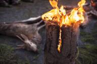 Burning log, dead deer on background - JOHF00760