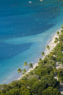 Aerial view of palm trees growing at Magens bay beach, St. Thomas, US Virgin islands - RUNF03210
