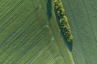 Germany, Mecklenburg-Western Pomerania, Aerial view of dirt road between green vast wheat fields in spring - RUEF02322