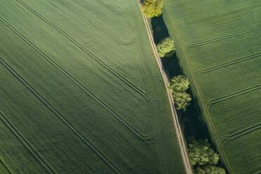 Germany, Mecklenburg-WesternPomerania, Aerial view of dirt road between green vast wheat fields in spring - RUEF02328