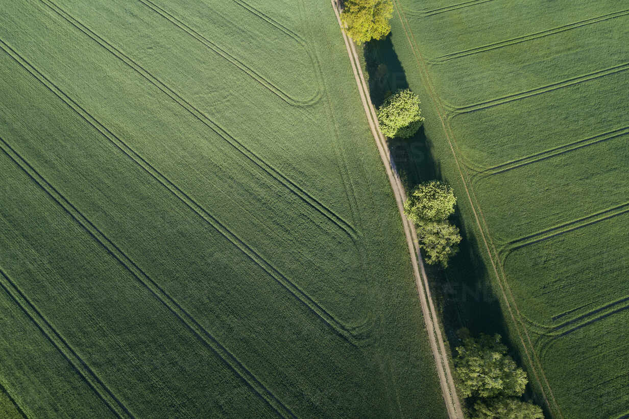 Germany, Mecklenburg-WesternPomerania, Aerial view of dirt road between green vast wheat fields in spring - RUEF02328 - Martin Rügner/Westend61