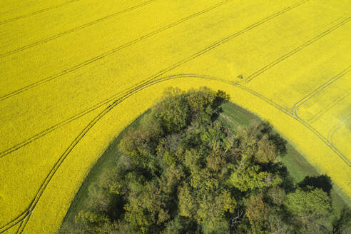 Germany, Mecklenburg-Western Pomerania, Aerial view of vast rapeseed field around edge of forest in spring - RUEF02337