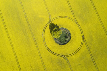 Germany, Mecklenburg-Western Pomerania, Aerial view of vast rapeseed field with lone tree growing in small green patch inside - RUEF02343