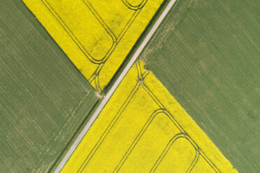Germany, Bavaria, Aerial view of dirt road between rapeseed and wheat fields in spring - RUEF02352