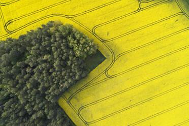 Germany, Bavaria, Aerial view of vast rapeseed field in spring - RUEF02355
