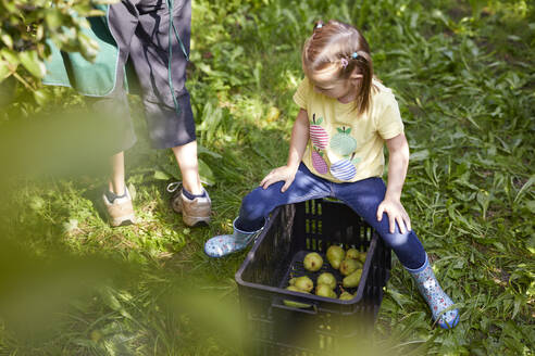Girl harvesting organic williams pears, sitting on fruit crate - SEBF00257