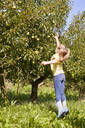 Girl harvesting organic williams pear - SEBF00275