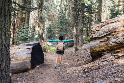 Woman with backpack hiking among the giant trees in the forest in Sequoia National Park, California, USA - GEMF03165