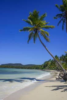 Palm trees at beach against blue sky during sunny day at Playa Grande, Dominican Republic - RUNF03273
