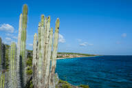 Cactus plants at beach against blue sky in Washington Slagbaai National Park, Bonaire, Netherlands - RUNF03309