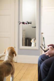 Dog looking at drone - JOHF01339