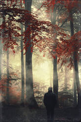 Rear view of man in autumn forest - DWIF01037