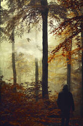 Rear view of man in autumn forest - DWIF01040