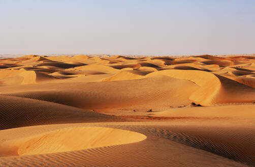 Sultanate Of Oman, Wahiba Sands, dunes in the desert - WWF05260